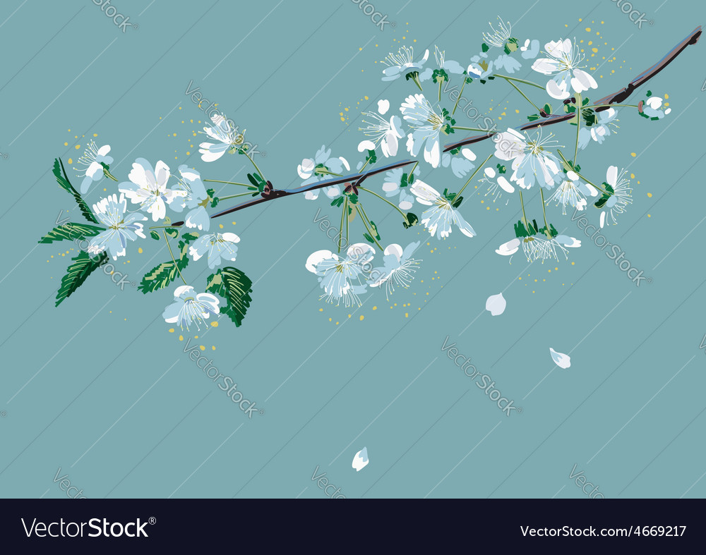 Branch of blossom cherry vector | Price: 1 Credit (USD $1)