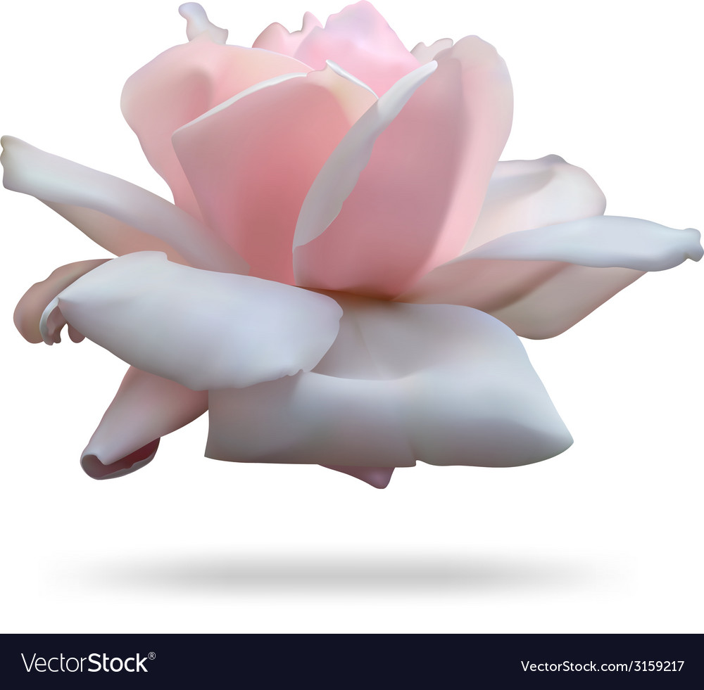 Pink rosebud isolated on white background vector | Price: 1 Credit (USD $1)