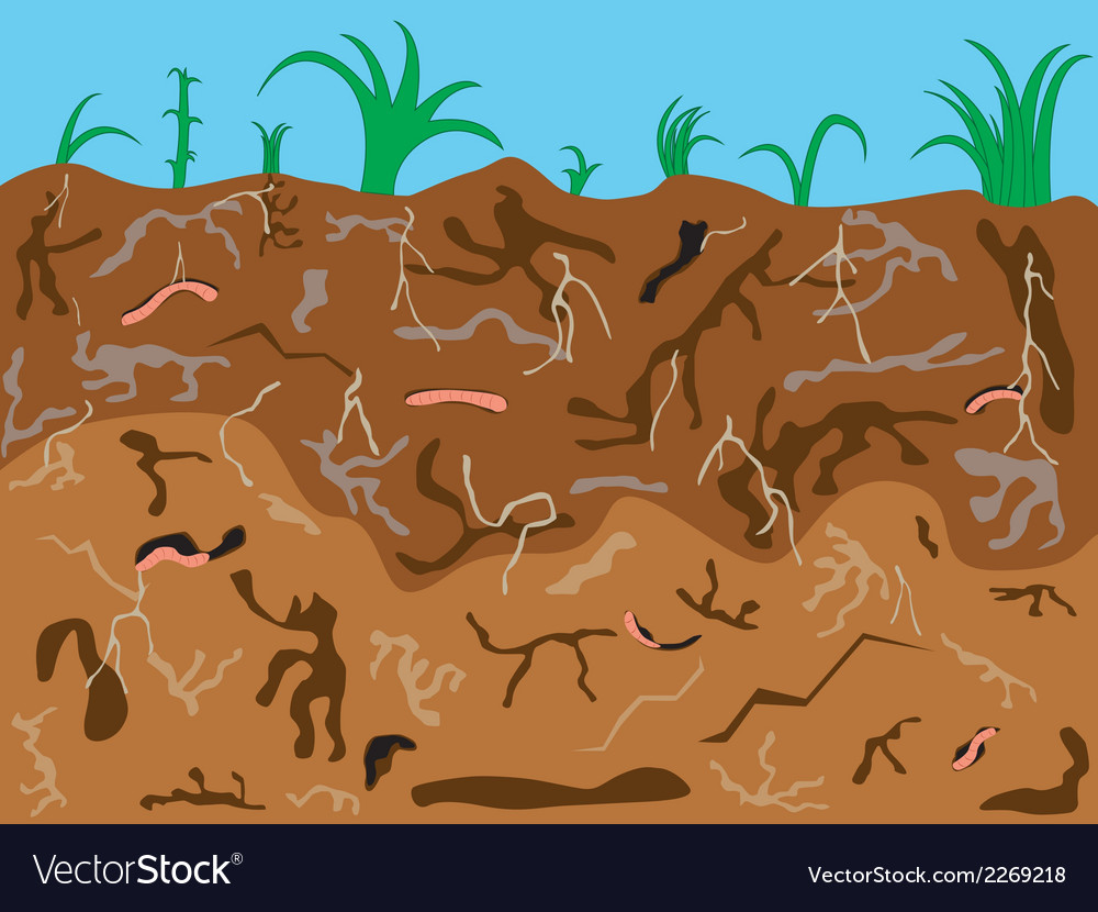 Worms underground vector | Price: 1 Credit (USD $1)