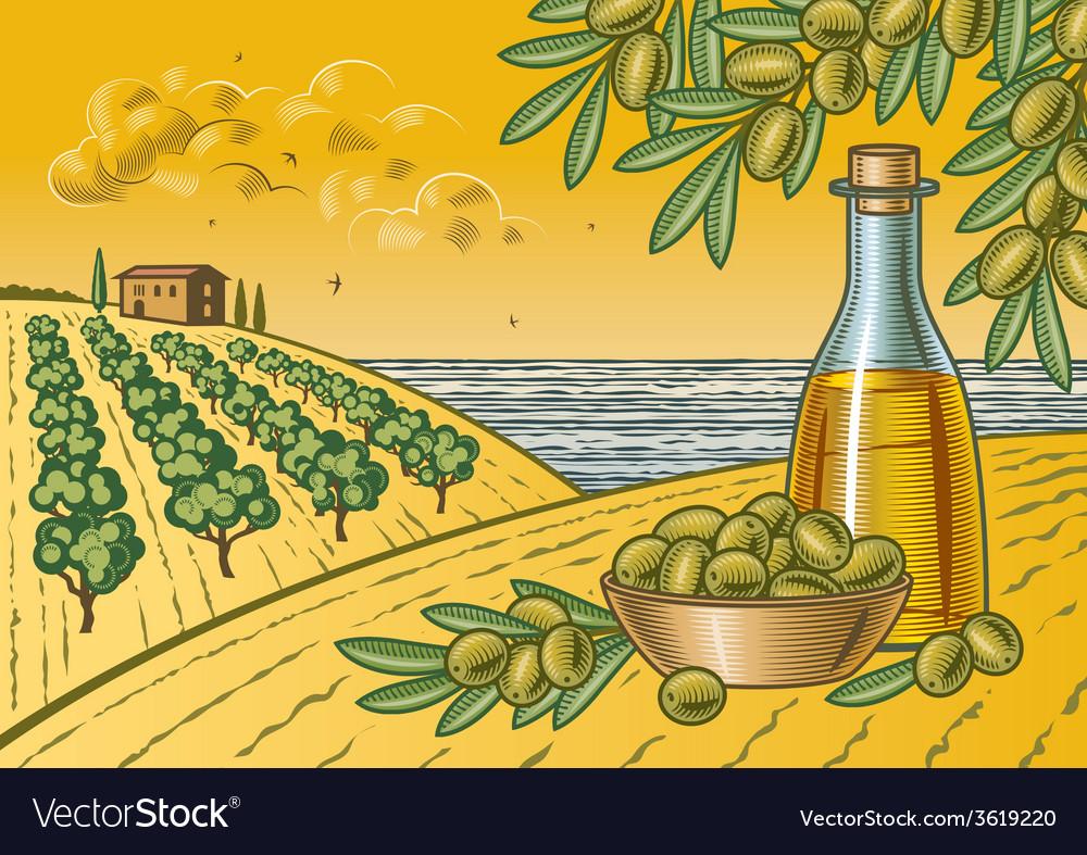 Olive harvest landscape vector | Price: 3 Credit (USD $3)