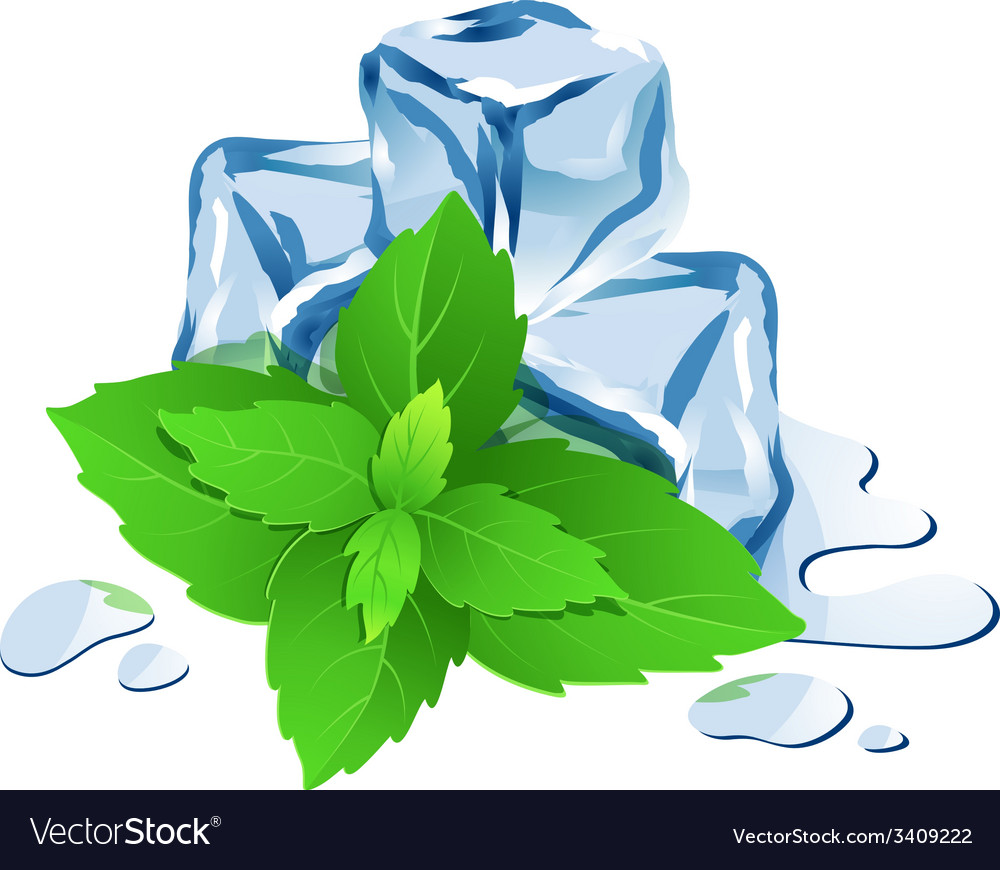Ice cubes with mint isolated on white vector | Price: 1 Credit (USD $1)