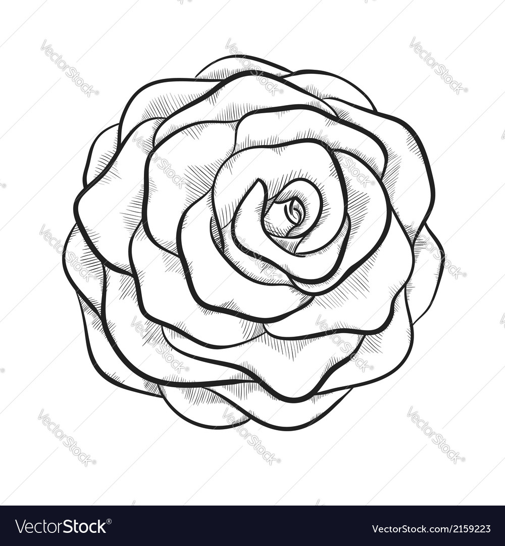Black and white rose isolated vector | Price: 1 Credit (USD $1)