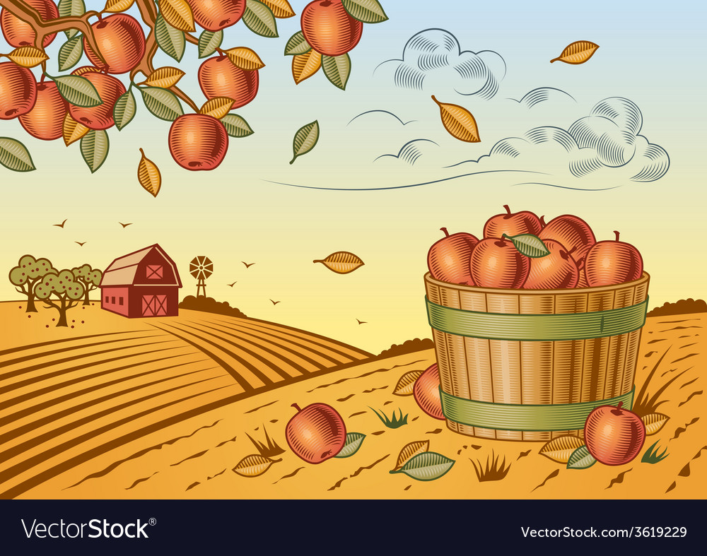 Apple harvest landscape vector | Price: 3 Credit (USD $3)