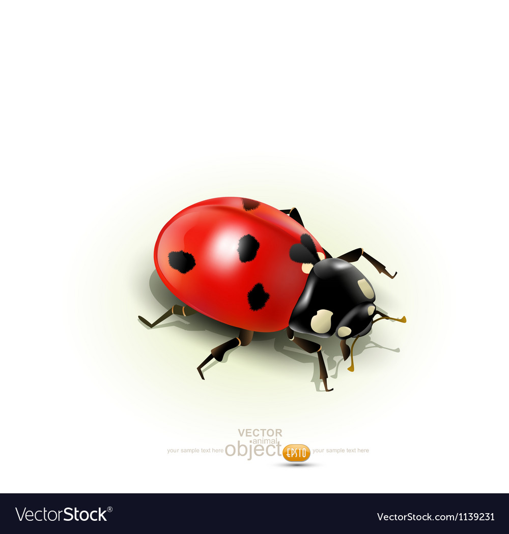 Ladybug isolated on white background vector | Price: 1 Credit (USD $1)