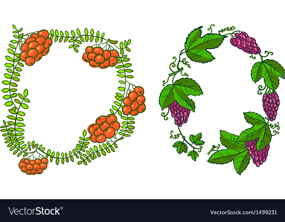 Rowan and grape vector | Price: 1 Credit (USD $1)