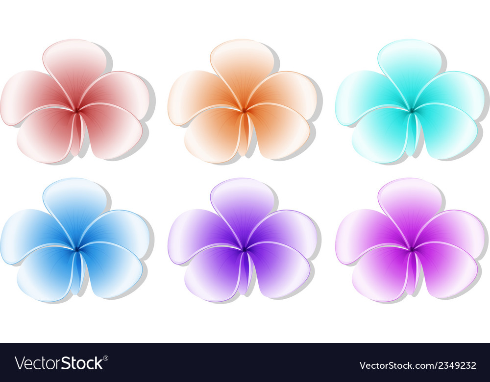 Six flowers vector | Price: 1 Credit (USD $1)