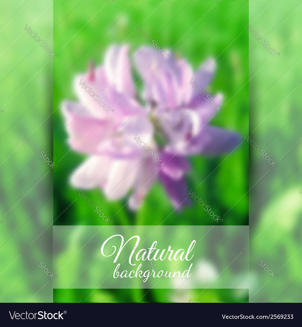 Beautiful blooming clover vector | Price: 1 Credit (USD $1)