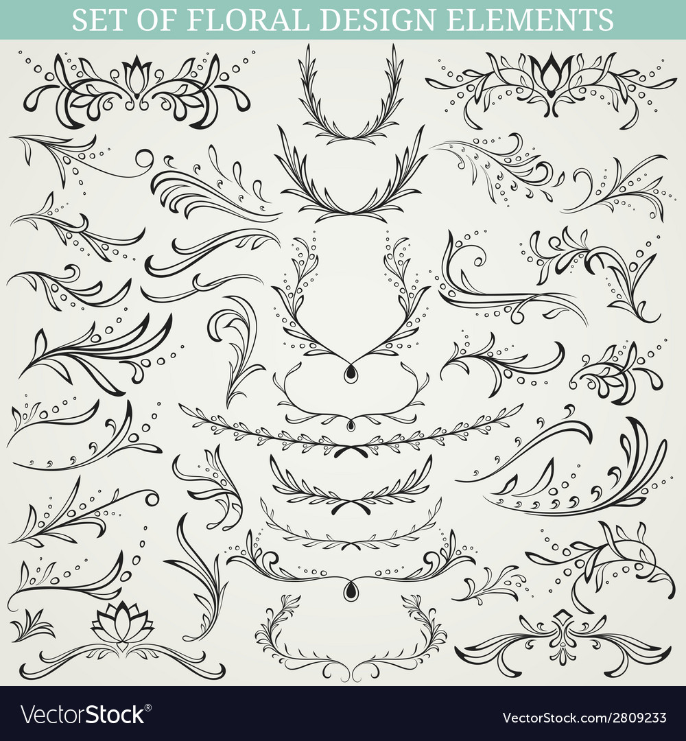 Collection of floral design elements vector