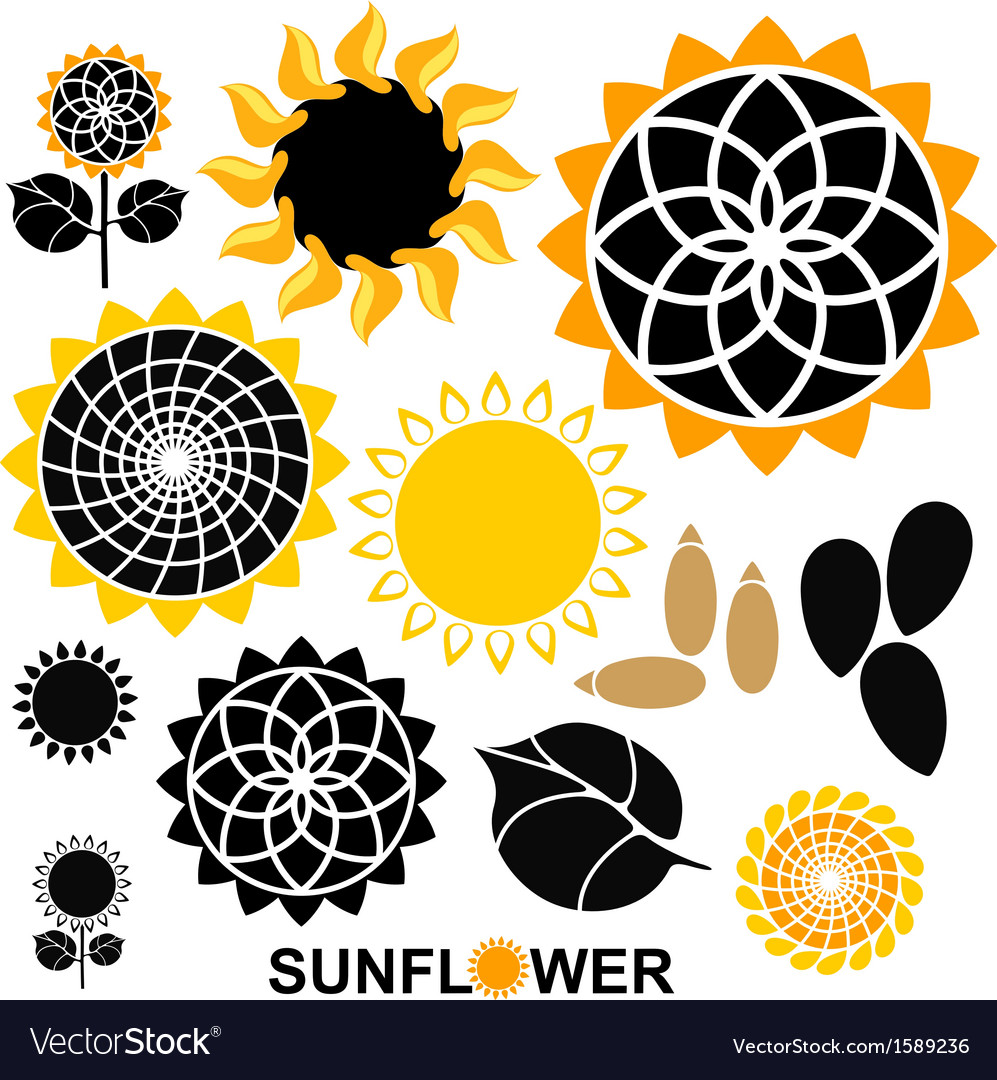 Sunflower set vector | Price: 1 Credit (USD $1)
