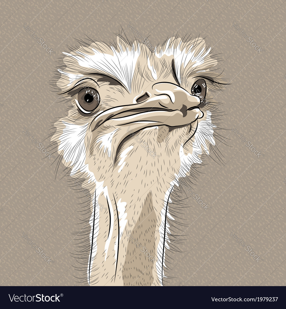 Funny ostrich bird vector | Price: 1 Credit (USD $1)