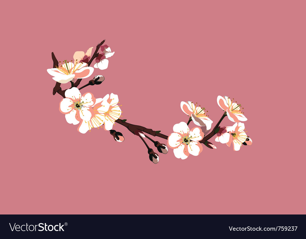 Sakura flower on red background vector | Price: 3 Credit (USD $3)