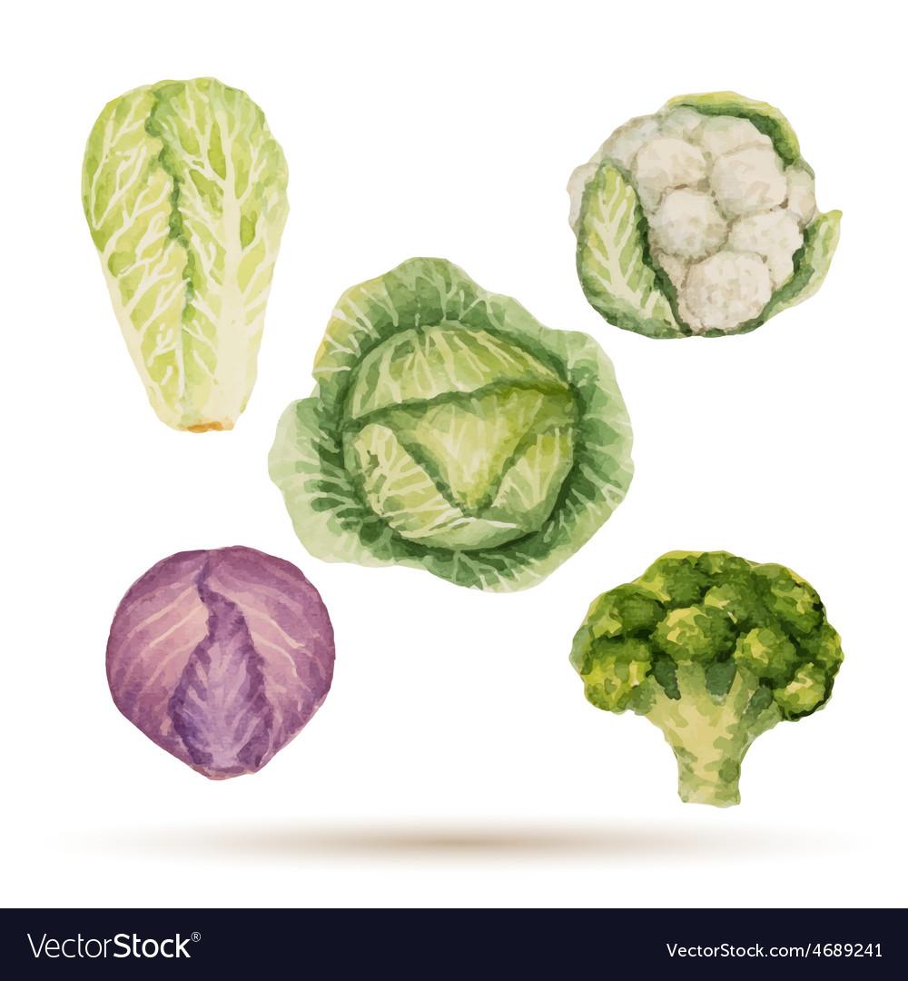 Set of watercolor vegetables vector   Price: 1 Credit (USD $1)