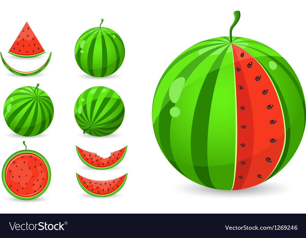 Whole and sliced watermelon set vector | Price: 1 Credit (USD $1)