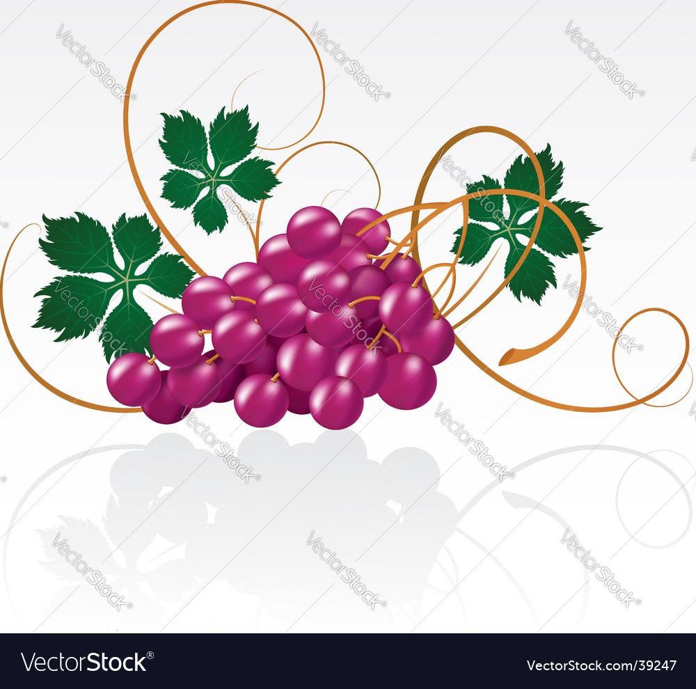 Grapes vector   Price: 1 Credit (USD $1)