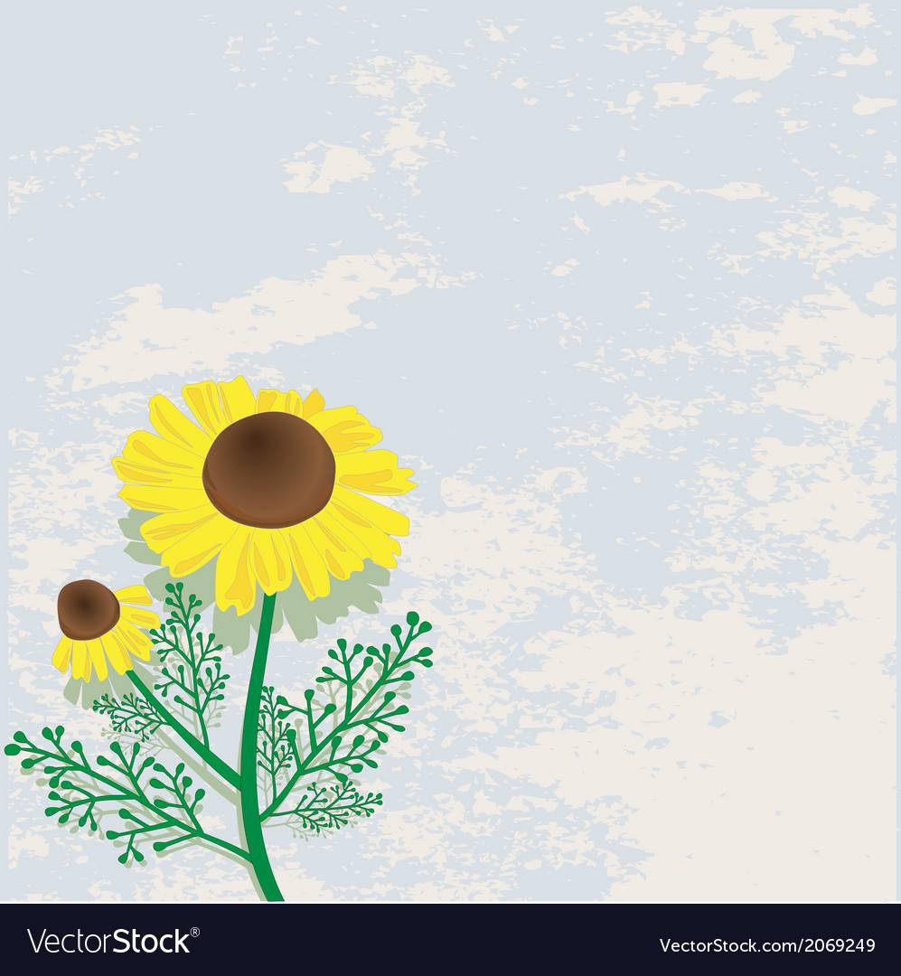Yellow flower vector | Price: 1 Credit (USD $1)