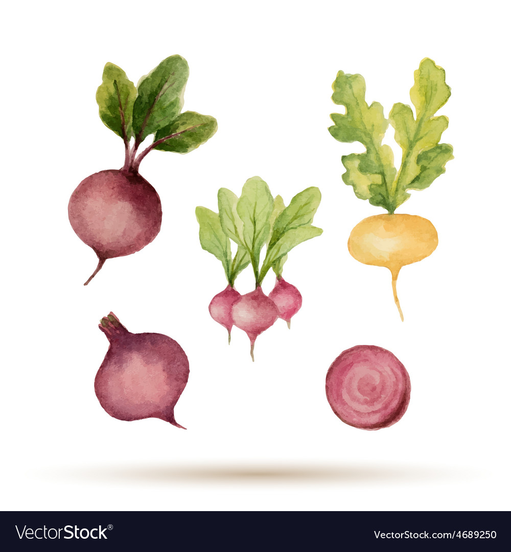 Set of watercolor vegetables vector | Price: 1 Credit (USD $1)