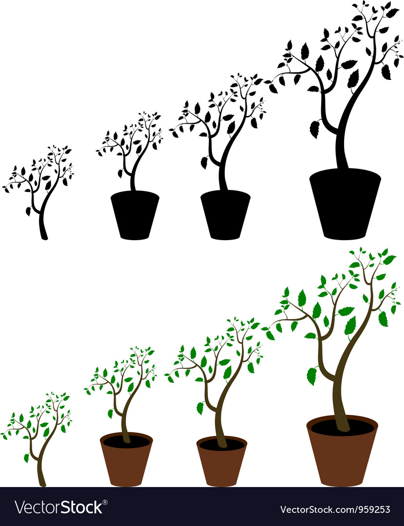 Indoor plant vector | Price: 1 Credit (USD $1)