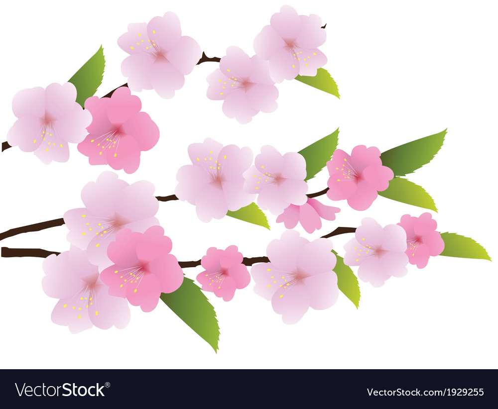 Flower pink vector | Price: 1 Credit (USD $1)