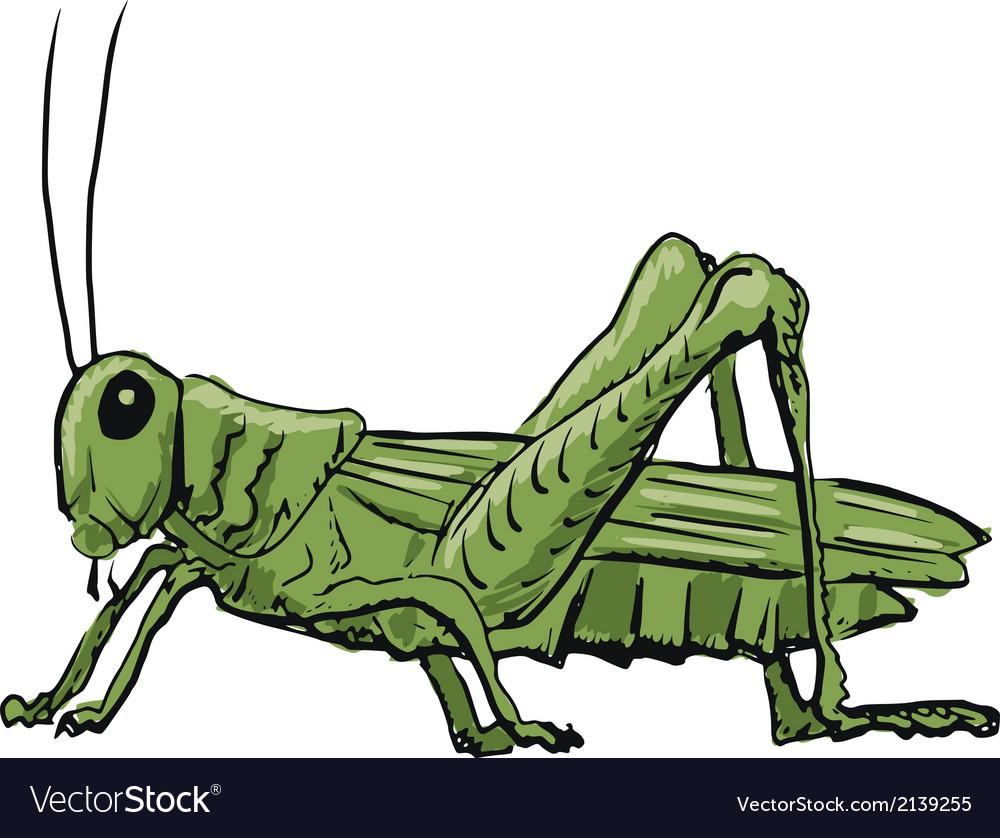 Grasshopper vector | Price: 1 Credit (USD $1)