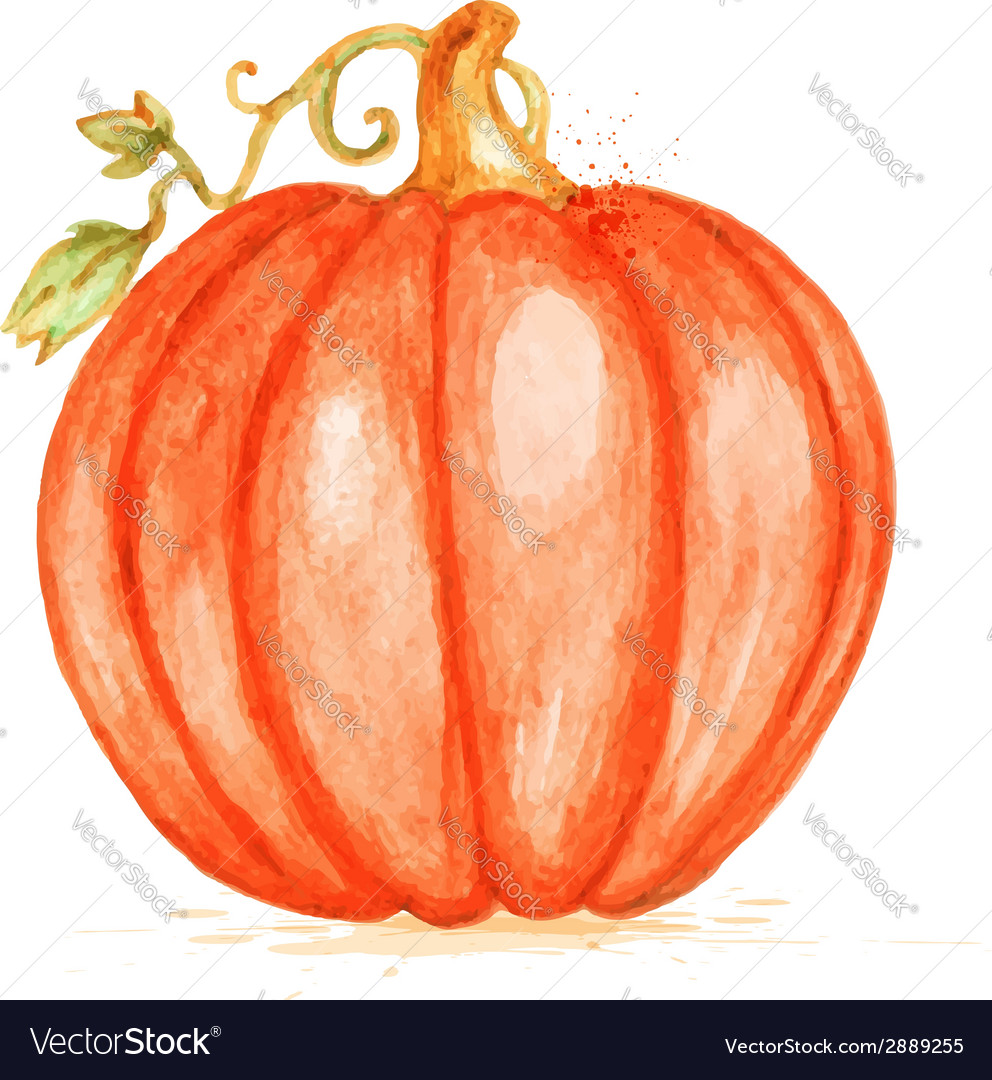 Watercolor orange pumpkin vector | Price: 1 Credit (USD $1)