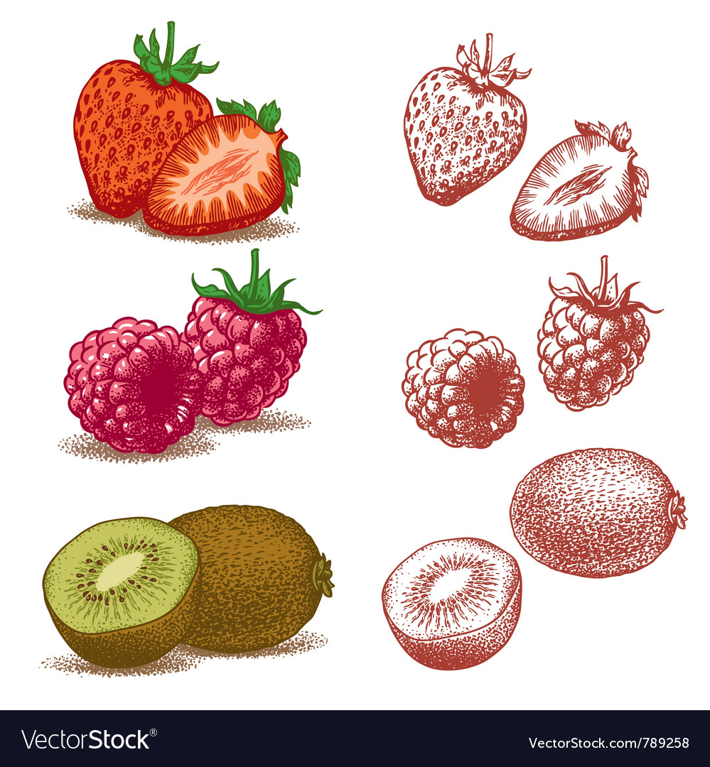 Strawberry raspberry and kiwi vector | Price: 3 Credit (USD $3)