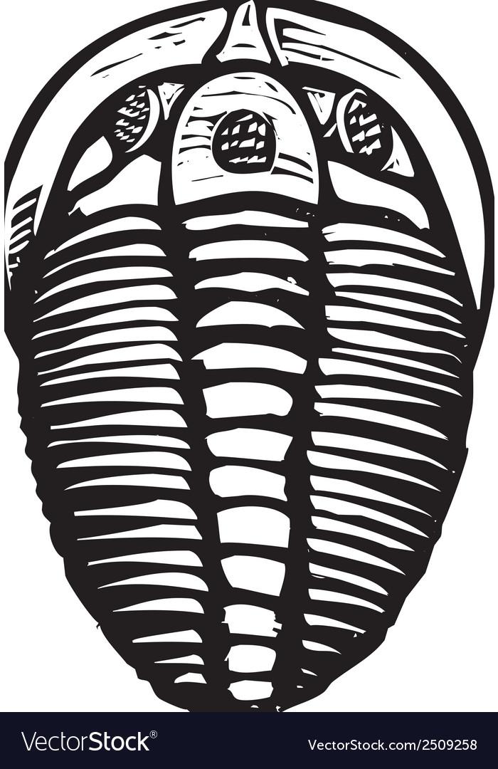 Trilobite vector | Price: 1 Credit (USD $1)