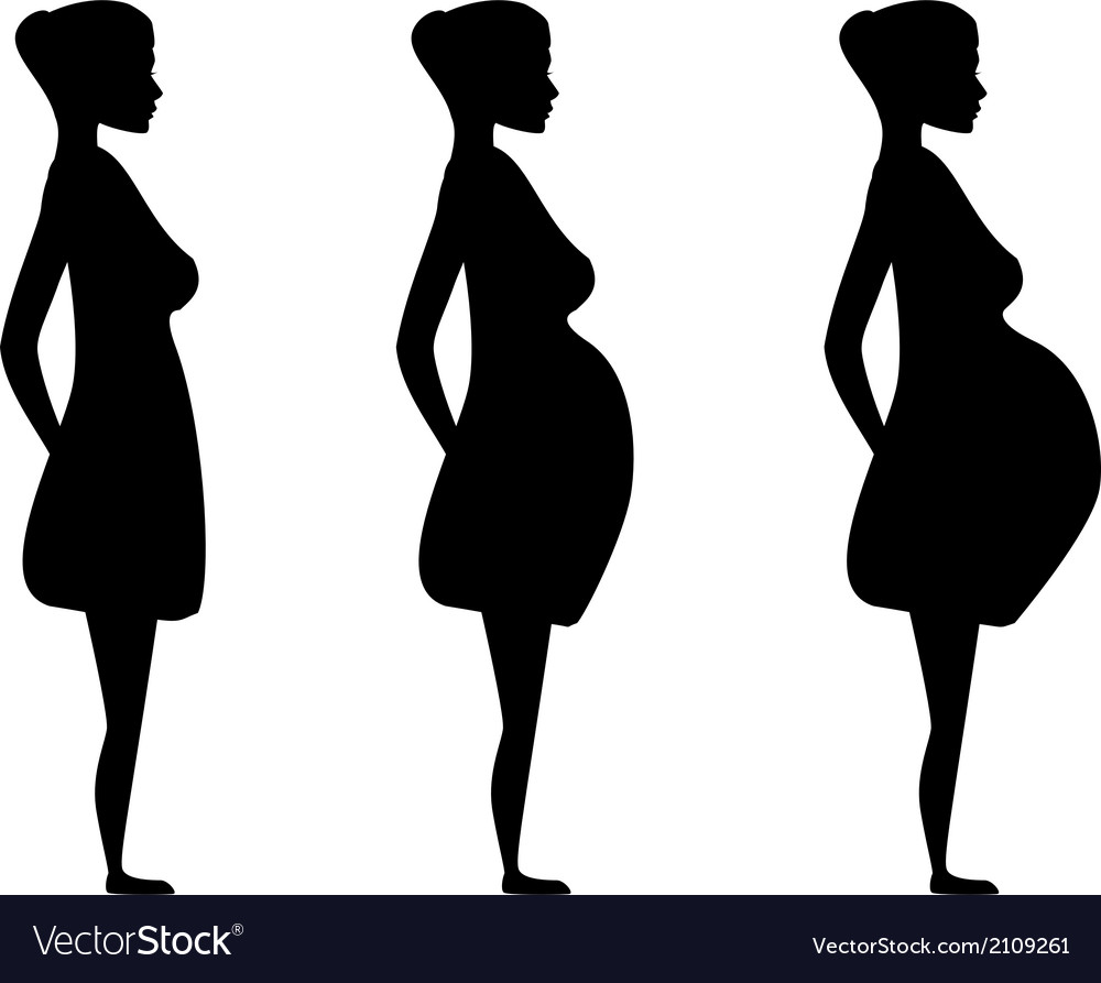 Pregnant women in the three trimesters vector | Price: 1 Credit (USD $1)
