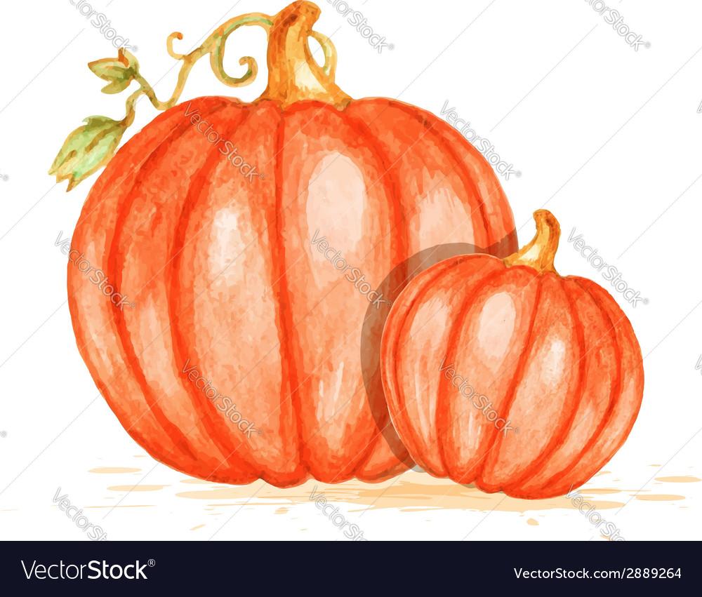 Watercolor orange pumpkins vector | Price: 1 Credit (USD $1)