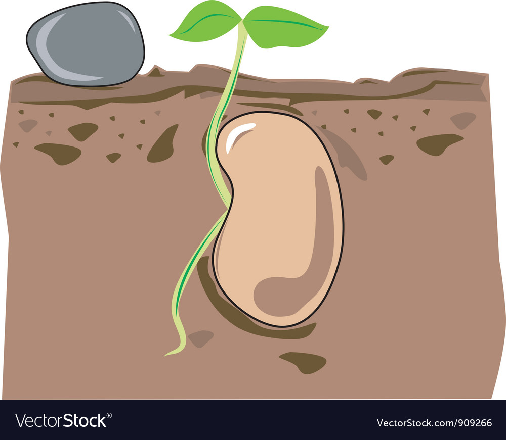 Seed growth vector | Price: 1 Credit (USD $1)