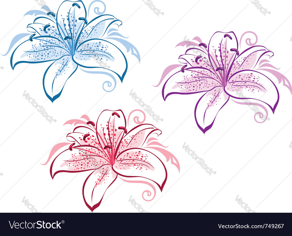 Lily flower set vector | Price: 1 Credit (USD $1)