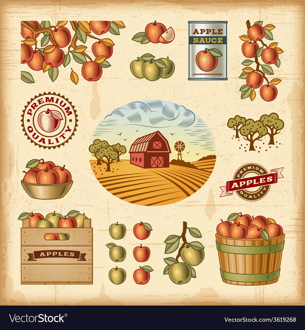 Vintage colorful apple harvest set vector | Price: 3 Credit (USD $3)