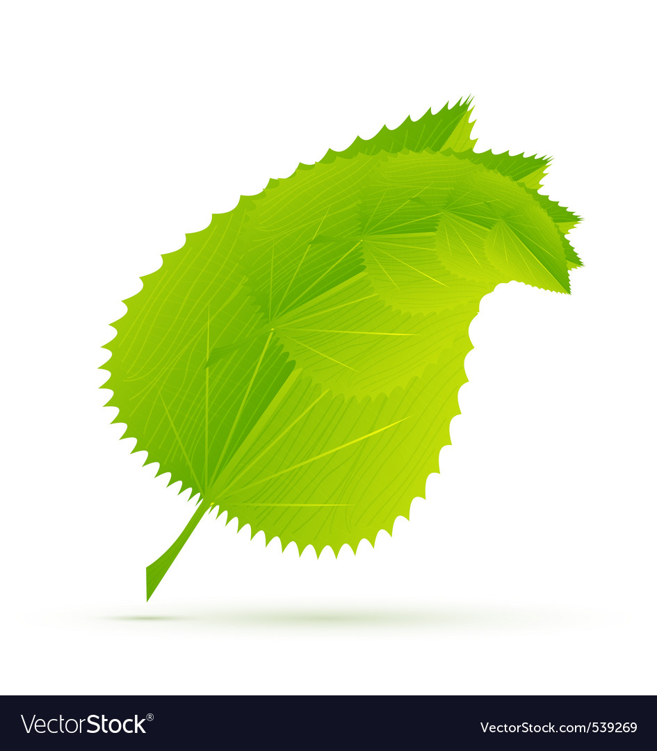 Modern leaves vector   Price: 1 Credit (USD $1)