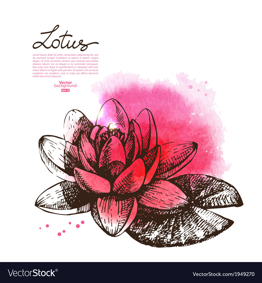 Background with hand drawn sketch beautiful lotus vector | Price: 1 Credit (USD $1)