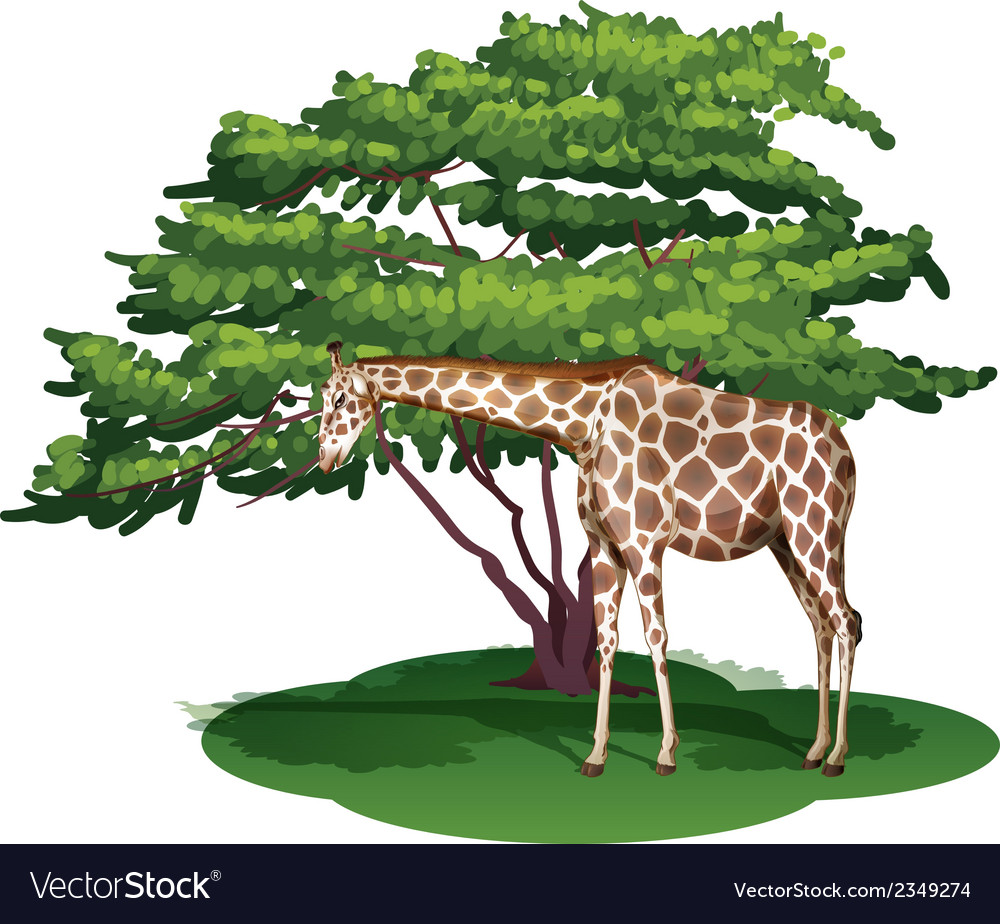 A giraffe under the tree vector | Price: 1 Credit (USD $1)