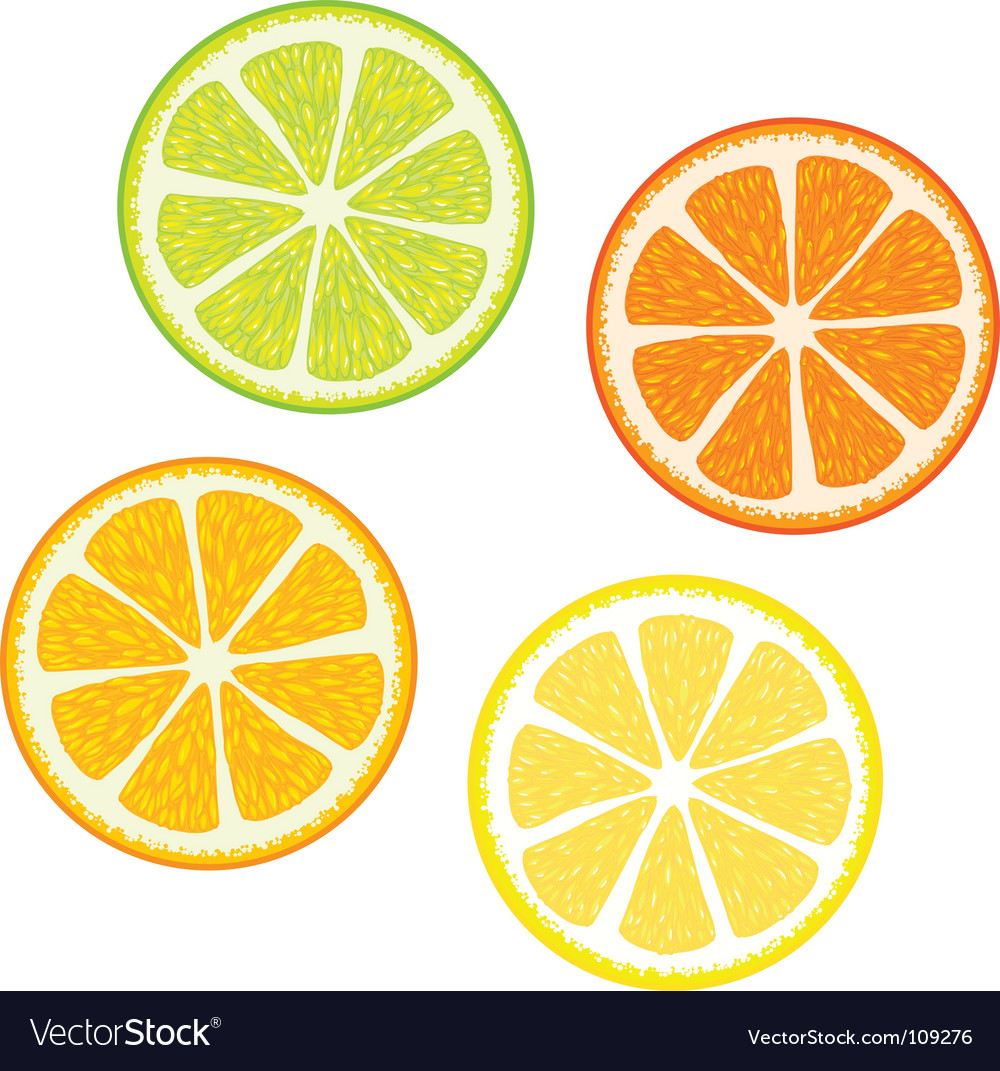 Citrus fruits vector | Price: 1 Credit (USD $1)