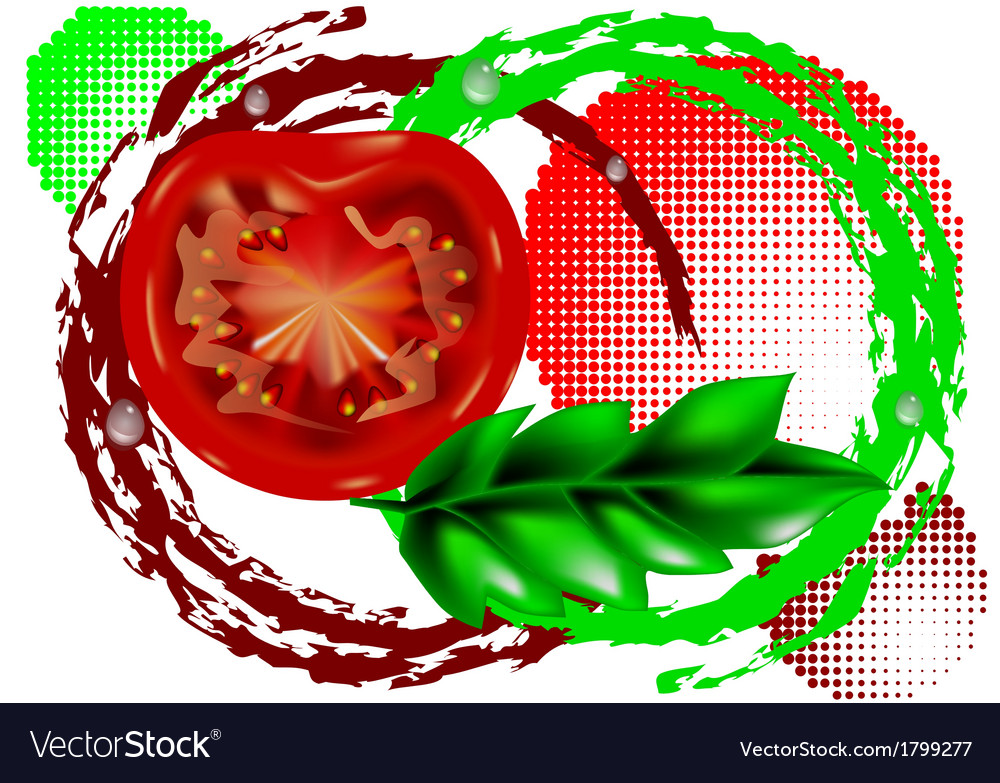 Fresh tomatoes vector | Price: 1 Credit (USD $1)