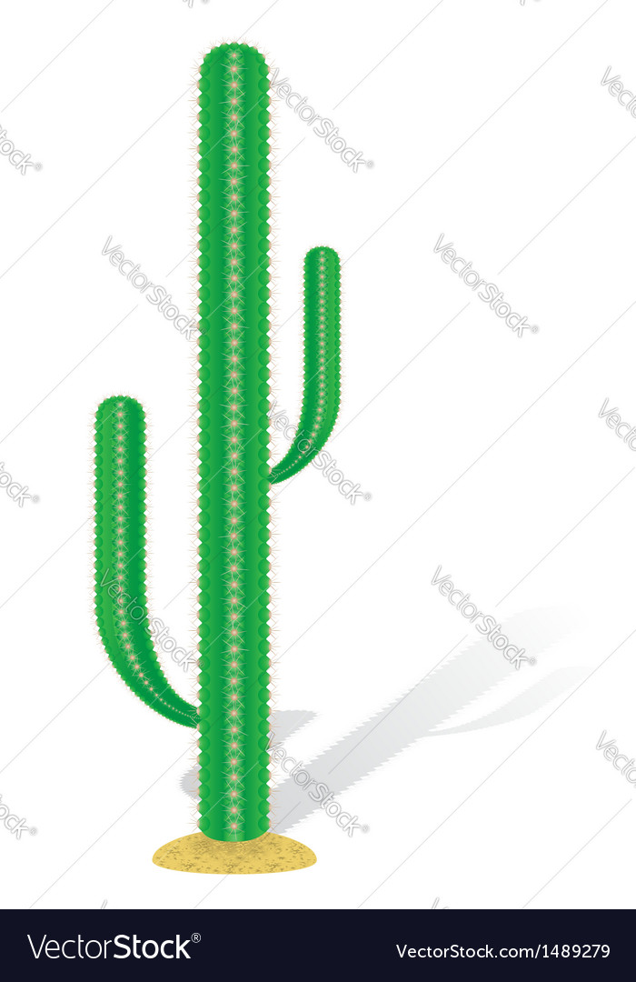 Cactus 01 vector | Price: 1 Credit (USD $1)