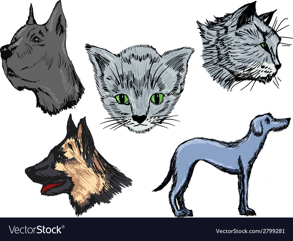 Pets vector | Price: 1 Credit (USD $1)
