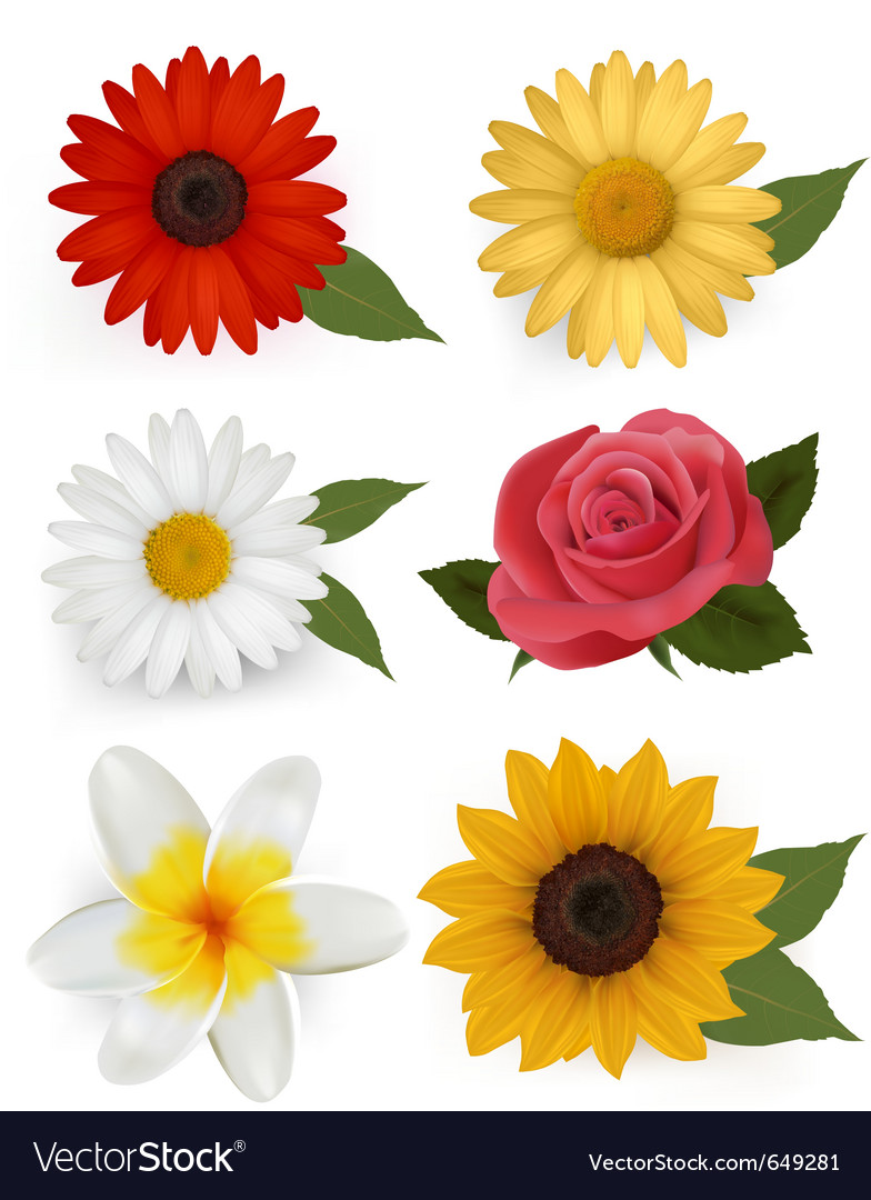Summer flowers vector | Price: 3 Credit (USD $3)