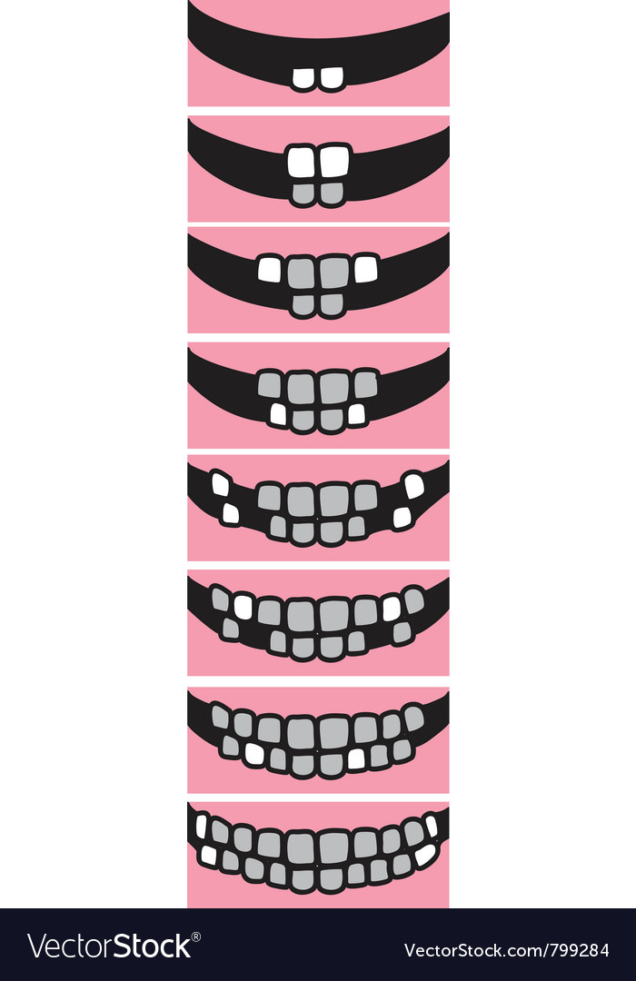 Depicting the sequence of eruption of rimary teeth vector | Price: 1 Credit (USD $1)