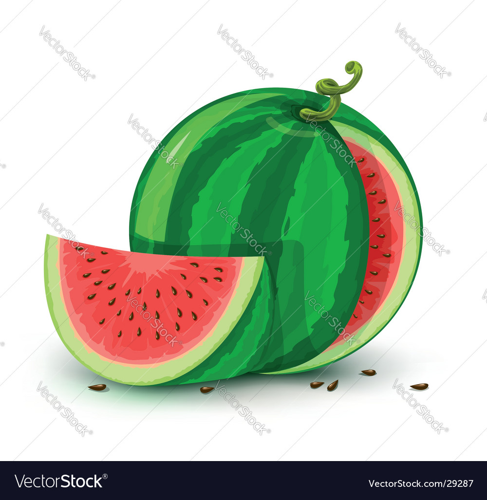 Water melon vector | Price: 3 Credit (USD $3)