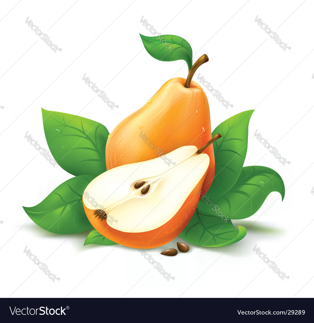 Fresh pear with cut vector | Price: 3 Credit (USD $3)