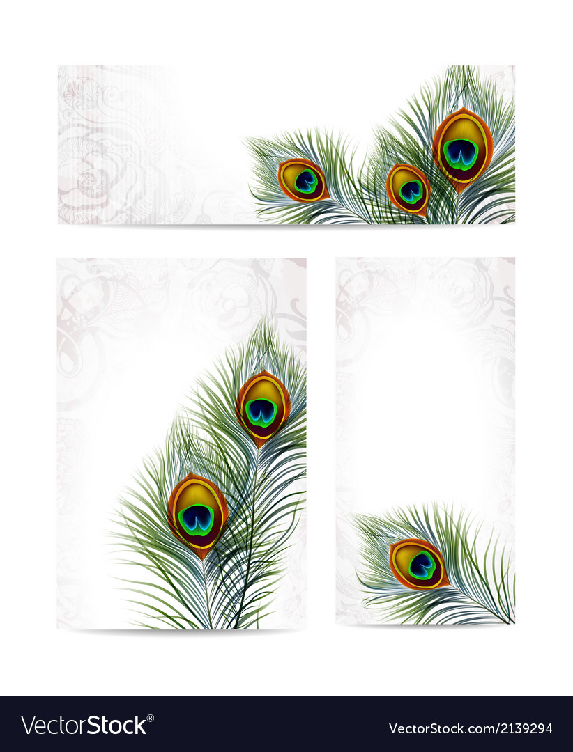 Set of beautiful peacock feathers eps 10 vector | Price: 1 Credit (USD $1)
