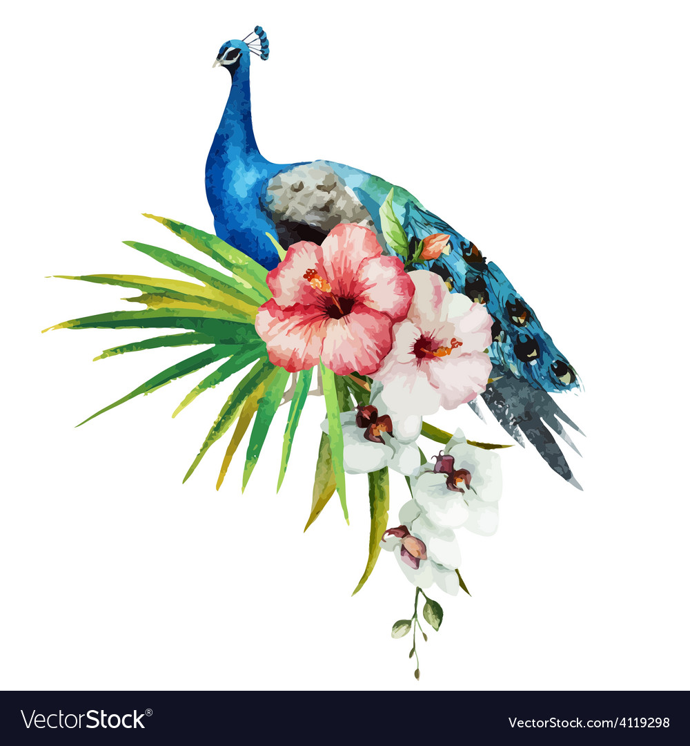 Peacock vector   Price: 1 Credit (USD $1)