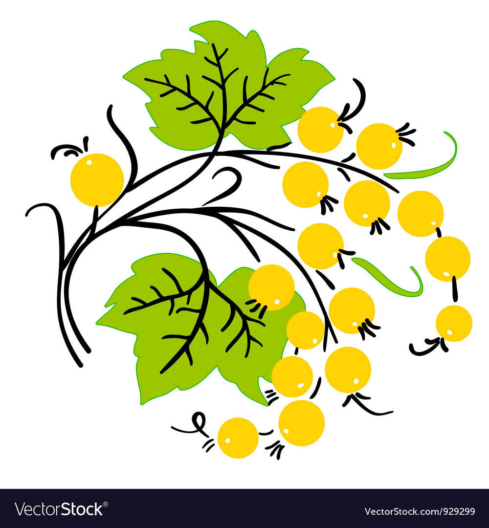 Bunch of yellow currant ripe berry vector | Price: 1 Credit (USD $1)
