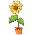 A flower plant in a pot vector