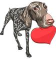 Smiling dog kurzhaar holding a red heart vector