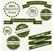 Dark green retro bio elements vector