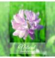 Beautiful blooming clover vector