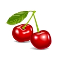Cherry red aroma food fruit vector